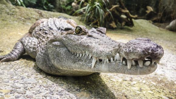 Un niño es devorado por un cocodrilo frente a sus hermanos