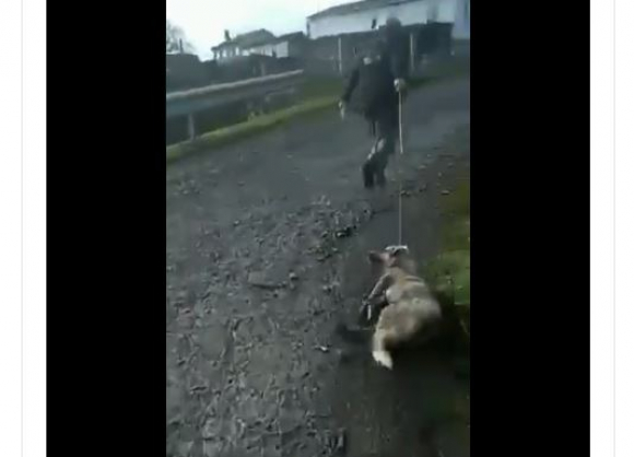 Maltrato animal: muere perra que fue arrastrada por cazador en España